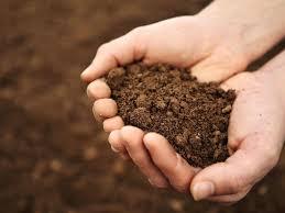 Soils Field Trip